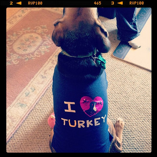 Thanksgiving foods that will make your dog sick