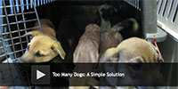 Too Many Dogs: A Simple Solution