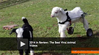 2014 in Review: The Best Viral Animal Videos