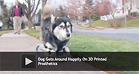 Dog Gets Around Happily On 3D Printed Prosthetics