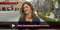 Dog Sabotages Reporter's Live Shot