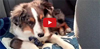 "Puppy Wakes Up to Sing Along with Frozen's ""Let it Go"""