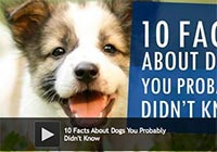 10 Facts About Dogs You Probably Didn't Know