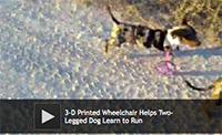 3-D Printed Wheelchair Helps Two-Legged Dog Learn to Run