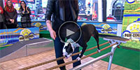 Dog Tricks Performed by Stunt Dogs