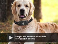 Gadgets and Wearables for Your Pet Showcased at 2015 CES