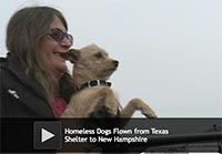 Homeless Dogs Flown from Texas Shelter to New Hampshire