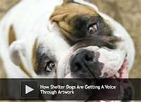 How Shelter Dogs Are Getting A Voice Through Artwork