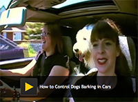 How to Control Dogs Barking in Cars