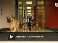 Puppy Bowl XI Lineup Released