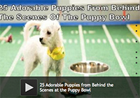 25 Adorable Puppies from Behind the Scenes at the Puppy Bowl