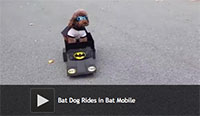 Bat Dog Rides in Bat Mobile