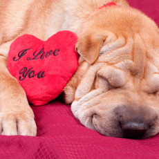 4 Ways to Get Your Four-Legged Friend Involved in Valentine's Day