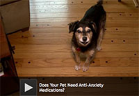 Does Your Pet Need Anti-Anxiety Medications?