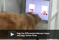 Dogs Can Differentiate Between Happy and Angry Human Faces