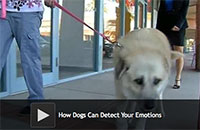 How Dogs Can Detect Your Emotions