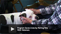 Program Saves Lives by Pairing Pets With Veterans