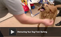 Tips for Distracting Your Dog From Barking