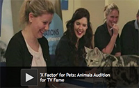 'X Factor' for Pets: Animals Audition for TV Fame
