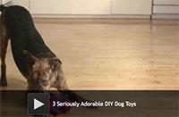 3 Adorable DIY Dog Toys