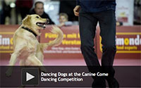 Dancing Dogs at the Canine Come Dancing Competition