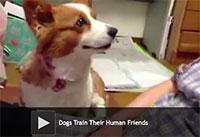 Dogs Train Their Human Friends