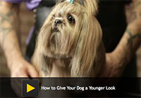 How to Give Your Dog a Younger Look