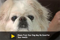 Kisses From Your Dog May Be Good for Your Health