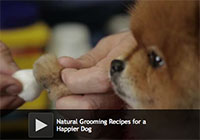 Natural Grooming Recipes for a Happier Dog