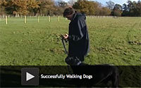 Successfully Walking Dogs