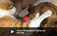 The Art Of Romance As Told By Cats And Dogs