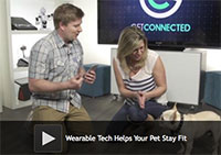 Wearable Tech Helps Your Dog Stay Fit