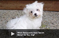 "Which Restaurants Have ""Secret Menus"" for Your Dog?"