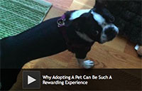 Why Adopting A Dog Can Be Such A Rewarding Experience