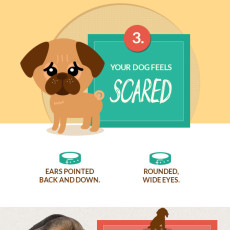 Decoding Your Dog: What Fido is Trying to Tell You [Infographic]