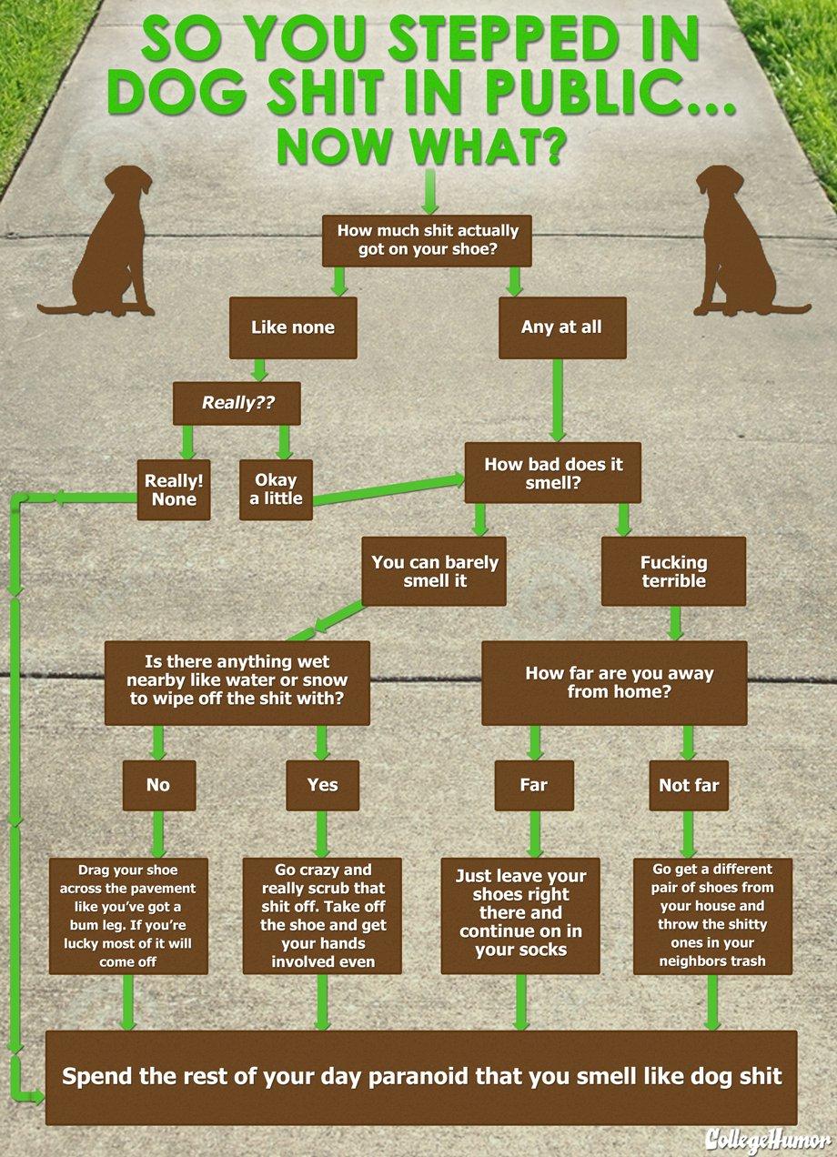 dog poo flow chart