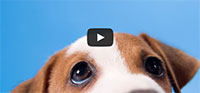 5 Amazing Dog Facts