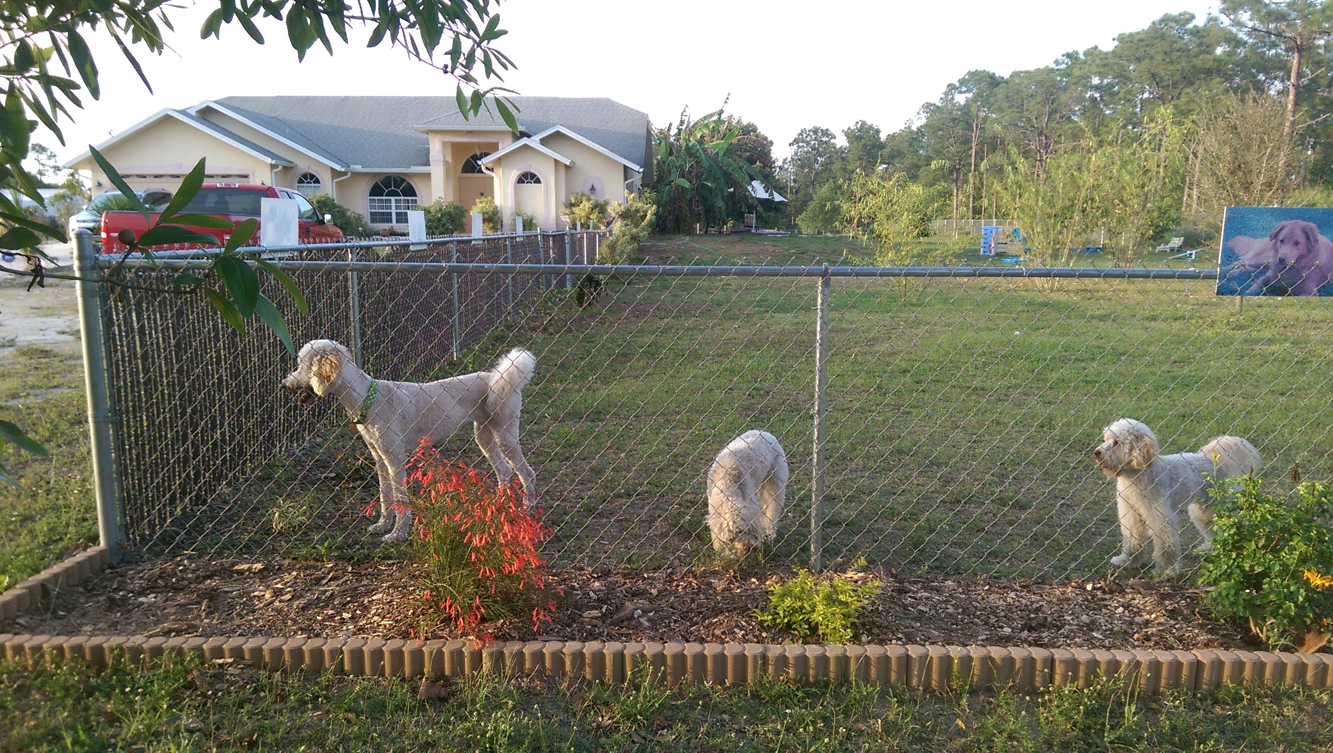 Dog Day Care Fort Myers Fl