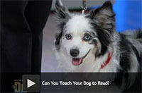 Can You Teach Your Dog to Read?