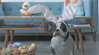 Dog in Easter bunny costume rides Roomba robot vacuum