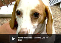 Home Remedies: Essential Oils for Dogs
