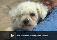 How To Protect Your Dog From The Flu