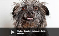 Shelter Dogs Get Makeovers To Get Adopted