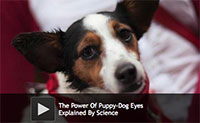 The Power Of Puppy-Dog Eyes Explained By Science