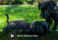 tips for adopting a puppy. Black Bedroom Furniture Sets. Home Design Ideas