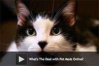 What's The Deal with Pet Meds Online