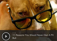 11 Reasons You Should Never Own A Pit Bull