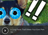 6 Corgi Facts That'll Make Your Ears Perk Up