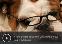 A Few Simple Tests Will Determine If Your Dog Is A Genius