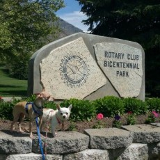 Bicentennial Park Bark Park Dog Park in Provo Utah
